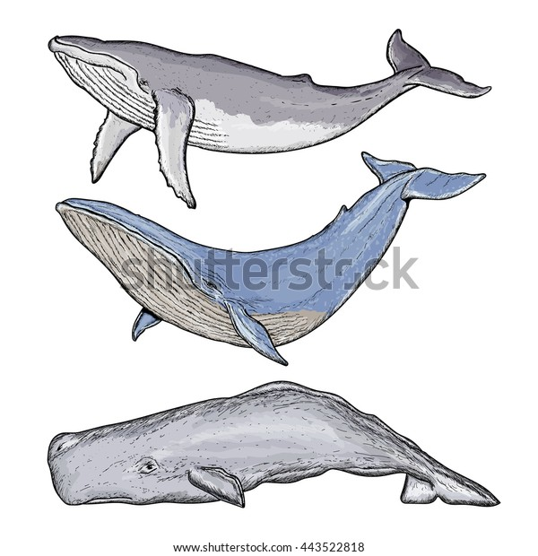 Image Vectorielle De Stock De Collection De Baleines Baleines A