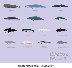 Whales and Dolphins Set Cartoon Vector Illustration