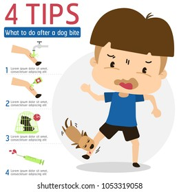 What to do after a dog bite Vector, Animal Bites and Rabies Risk.