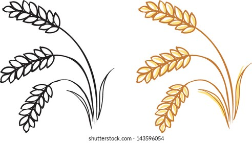 Wheat barley ears vector illustration