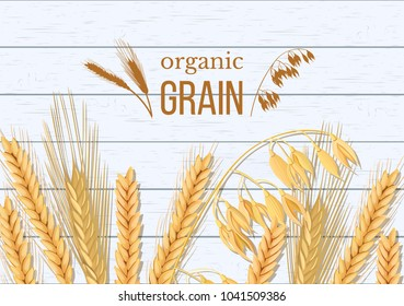 Wheat, barley, oat and rye on white wooden background. Cereals spikelets with ears, sheaf and text organic grain, natural product. 3d icon vector. For design, cooking, bakery, tags, labels textile