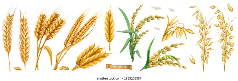 Wheat, barley, oats, rice. 3d realistic vector set