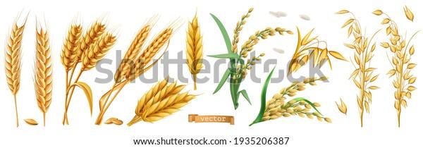 Wheat, barley, oats, rice. 3d realistic vector set