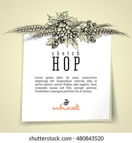 Wheat and beer hops branch with wheat ears, leaves and cones vector background. Sketch and engraving design layout hop plant frame. All element isolated.