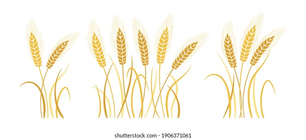 Wheat bunch ears cartoon set. Gold ripe spikelets wheat collection. Agricultural symbol oat bakery, flour production. Design organic farm elements, organic vegetarian bread packaging beer label vector