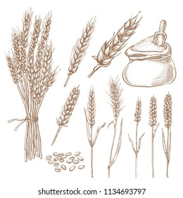 Wheat cereal spikelets, grain and flour bag vector sketch illustration. Hand drawn isolated bakery design elements.