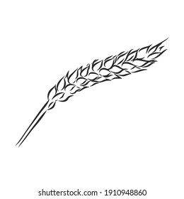 Wheat Ear Handmade vector illustration, sketch. wheat vector sketch illustration