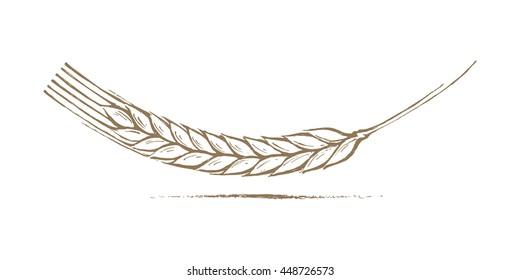 Wheat Ear Handmade vector illustration, sketch