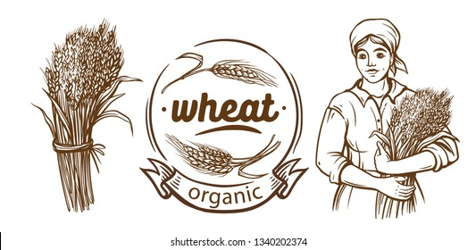 Wheat ears hand drawn. Set isolated vector illustration. Beautiful woman farmer holding a wheat. Bakery shop. Wheat bouquet.
