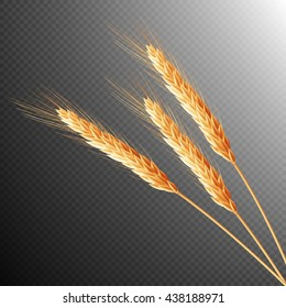 Wheat ears isolated on transparent background with space for text. EPS 10 vector file included