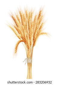 Wheat ears isolated on white background. EPS 10 vector file included
