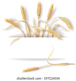 Wheat ears with space for text.
