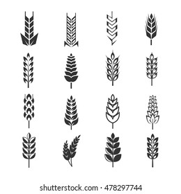 Wheat ears vector icons. Natural harvest rye and organic food illustration