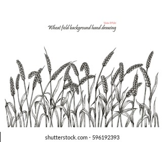 Wheat field background hand drawing
