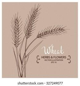 Wheat, Hand drawn Vector Illustration
