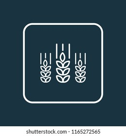 Wheat icon line symbol. Premium quality isolated cereal element in trendy style.