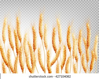 Wheat isolated on a transparent background. EPS 10 vector file included