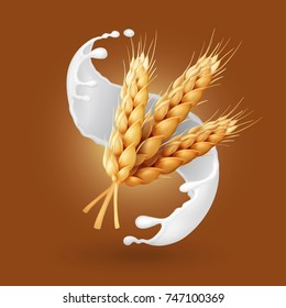 Wheat and milk splash. Barley cereals in yogurt illustration. Realistic vector