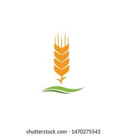 wheat paddy logo,background vector illustration,