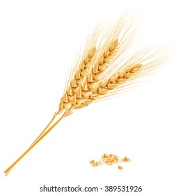 Wheat, realistic vector illustration