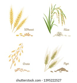 Wheat, rye, rice and oats isolated on white background. Set of agricultural crops in cartoon flat style. Vector stock illustration of spikes and grains.