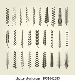 Wheat and rye spikelet collection in different style, heraldic design elements for emblems and blazons, vector