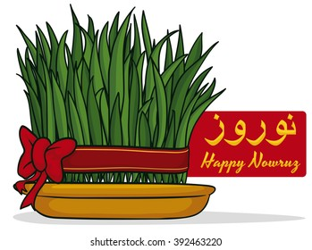 """Wheat sprouts (in persian tradition of Haft Seen: """"Sabzeh"""") tied with a red ribbon and a bow growing in a golden dish for Persian New Year or """"Nowruz""""."""