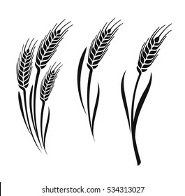 Wheat vector ears collection on white background