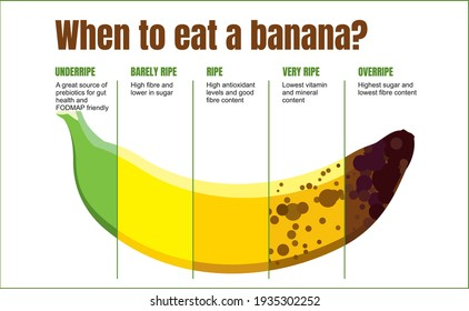 When to eat a banana. Banana ripeness table. Characteristics of unripe, ripe and overripe bananas. Fruit infographics on white background