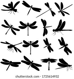 white background, black silhouette dragonfly, background