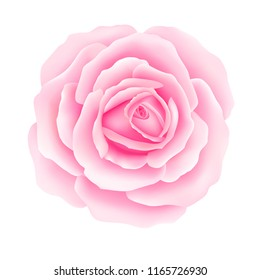 White background with a Pink Rose Flower. Vector