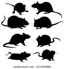white background, rats, mouse, rodents, silhouette, set