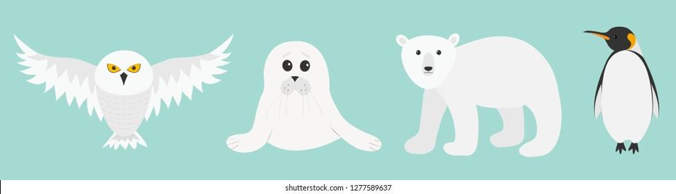 White bear, owl, king penguin Emperor Aptenodytes Patagonicus, Seal pup baby harp. Arctic polar animal set. Kids education cards. Flat design. Winter antarctica blue background. Vector illustration