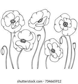 white black hand drawn contour poppy flowers