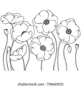 white black hand drawn contour poppy flowers