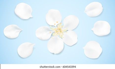 White and blue pastel background with spring flower top view. Apple tree blossom petals on the table illustration