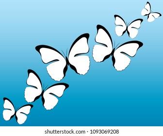 White Butterflies Vector Design