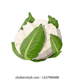 White cauliflower vegetable. Cauliflower isolated on white background. Organic food. Vector illustration in flat style