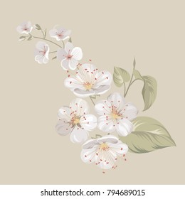 White cherry blossom flowers or Sakura twig isolated on biege background. Flower spring invitation. Vector illustration.