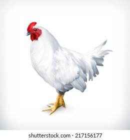White chicken, vector illustration
