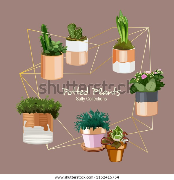 White and chrome gold accents potted plants fill with succulent and cactus