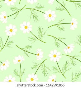 White Cosmos Flower on Green Background. Vector Illustration.