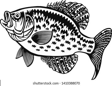 White Crappie fish - Freshwater sport fish - vector illustration