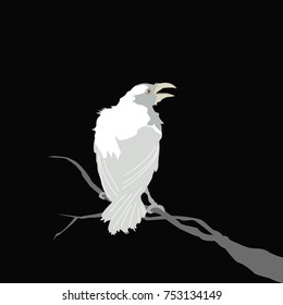 white crow sitting on a branch on a black background