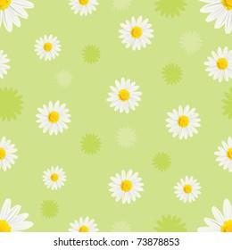 white daisy background
