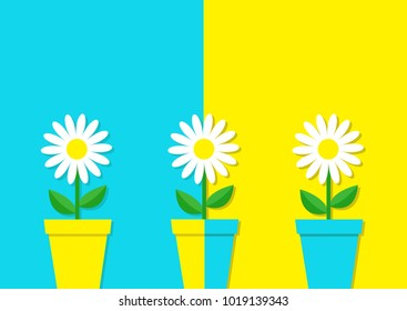 White daisy chamomile icon. Three flower pot set. Cute plant collection. Love card. Camomile Growing concept. Flat design. Bright blue yellow colorful background. Template Isolated Vector illustration
