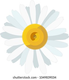 White daisy flower close-up. Camomile icon. Vector Illustration isolated on a white background.