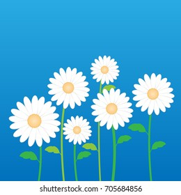 White Daisy Flower In Decorative Stock