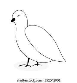White dove animal vector. white bird isolated, pigeon cartoon illustration