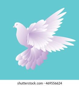 White dove in a blue sky